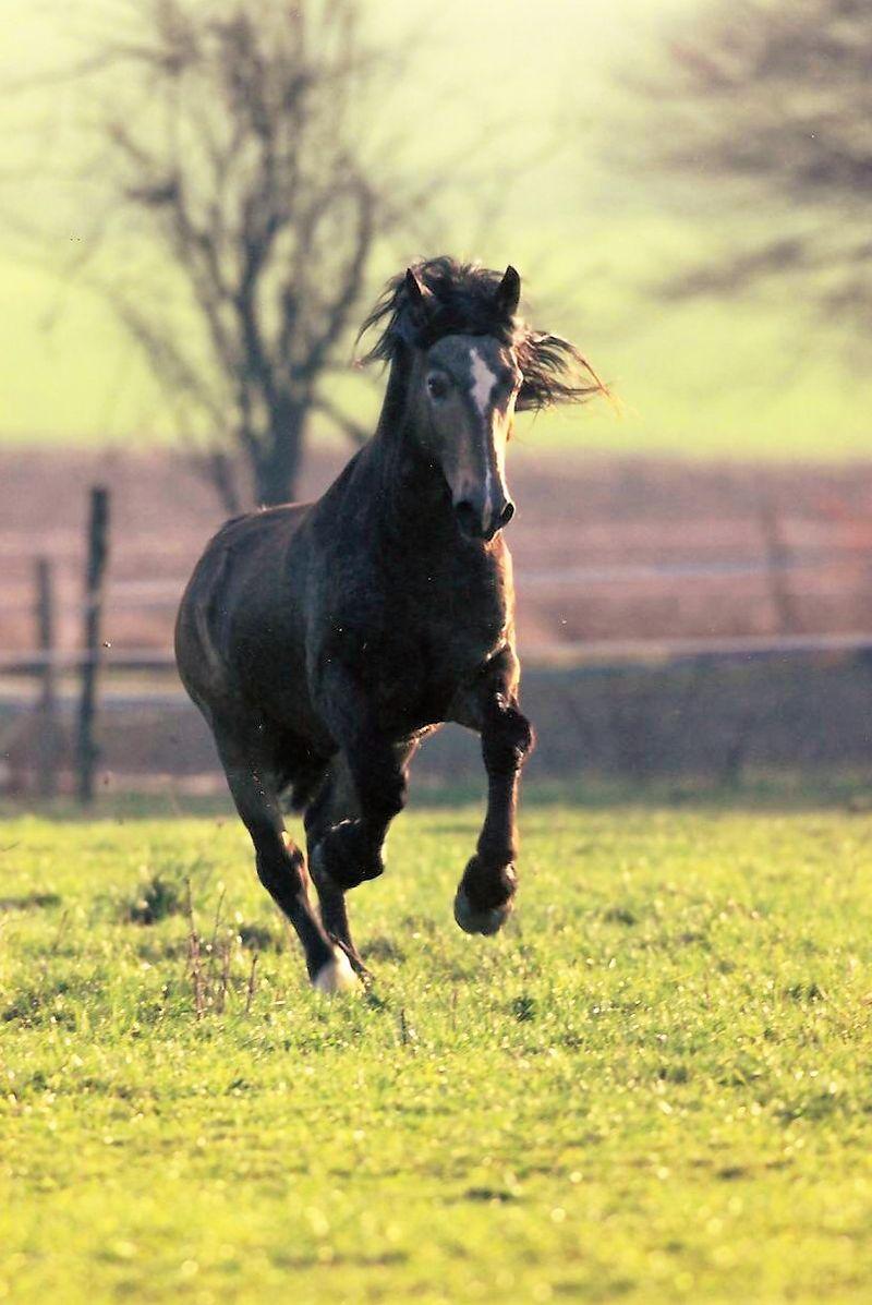 chevaux sauvages refait sur poney academy jeu gratuit poneys pour petits et grands. Black Bedroom Furniture Sets. Home Design Ideas