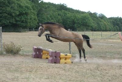 image-chevaux_a_vendre_photo_1.jpg