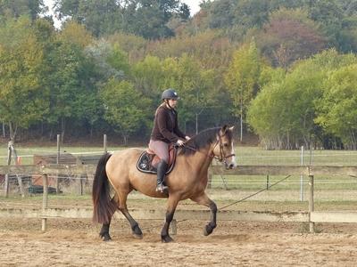 poney b a confier
